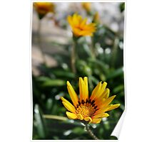 yellow flowers in a short depth of field Poster