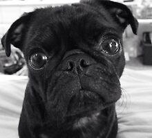 Pug life  by Kreardon