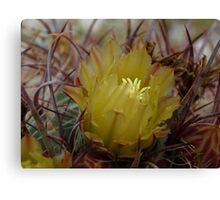 Nestled in the Thorns Canvas Print