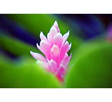 Wild Ginger Photographic Print