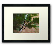 Arachnophobics Beware! Framed Print