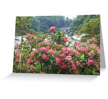 Red Flowers in Front of Lake Greeting Card