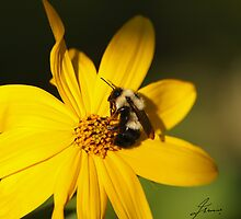 The Methotical Bumble Bee by DigitallyStill