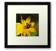 The Methotical Bumble Bee Framed Print
