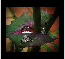 aphid oasis Photographic Print