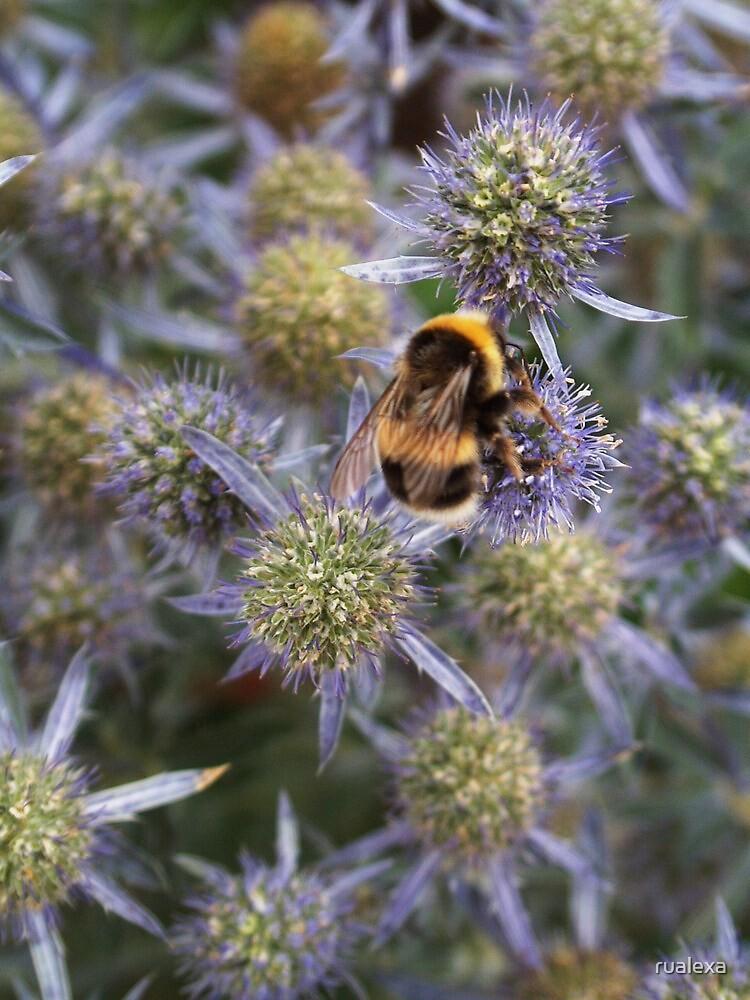 Bumble Bee on purple flower by rualexa