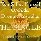 Ken & Bev Purcell Orchids by David  Piko