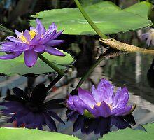 Water Nymphs, Kew Gardens by snefne