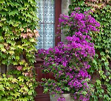 Ivy And Bougainvillea by phil decocco