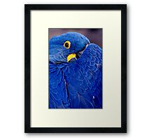 I'm Keepin An Eye On You!! Framed Print