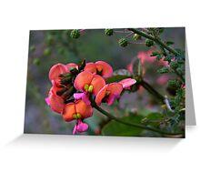 Pea Flower Greeting Card