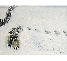 Swaledales in Snow Photographic Print