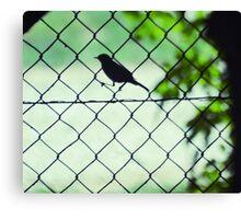 little bird on  fence Canvas Print