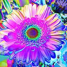 Psychedelic Gerbera by aneyefornature
