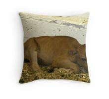 baby calf Throw Pillow