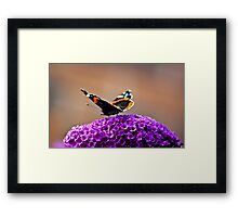 Butterfly & Lilac #2 Framed Print