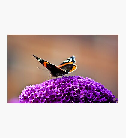 Butterfly & Lilac #2 Photographic Print