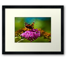 Butterfly & Lilac #3 Framed Print