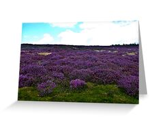Heather on the Moors. Greeting Card