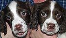 Terrible Twins by Ryan Davison Crisp
