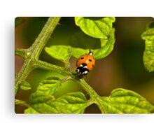 Six Spot Ladybird Canvas Print