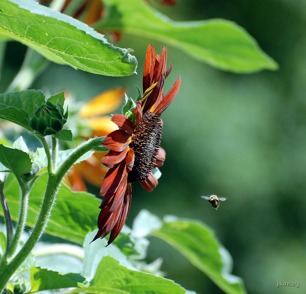 Flight Plan - Bee enroute to Sunflower by jlkinsey