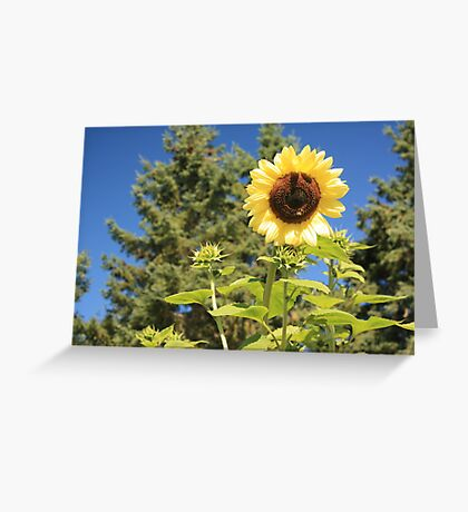 Sunflower from planet earth Greeting Card