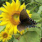 Sunflower Magic by JoyceAnn