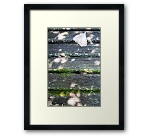 aged wood in autumn 2 Framed Print