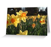 Field of Spring Bulbs Greeting Card