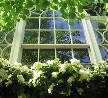 WINDOW BOX IN BOSTON by Joan Harrison