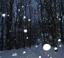 Falling snowflakes in British woodland. by Kathy Dellow