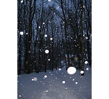 Falling snowflakes in British woodland. Photographic Print