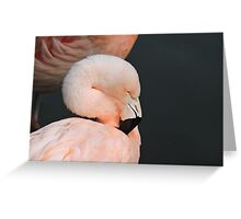 Pink With Desire Greeting Card