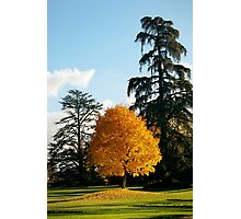 Chaumont Gardens Photographic Print