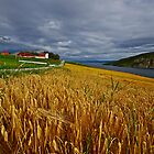 Views: 4470 .The DeeZ 5Cs Award Banner. Verrasundet Sor-Trondelag . Norway. Brown Sugar Story . This image Has Been S O L D .  Brilliant work by © Andrzej Goszcz,M.D. Ph.D