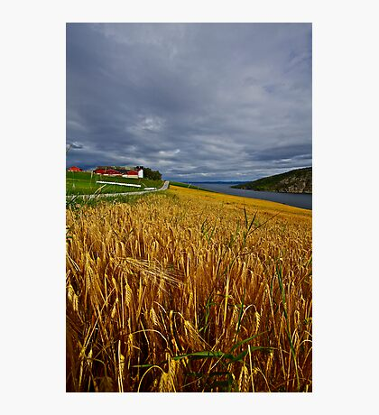 Views: 4470 .The DeeZ 5Cs Award Banner. Verrasundet Sor-Trondelag . Norway. Brown Sugar Story . This image Has Been S O L D .  Brilliant work Photographic Print