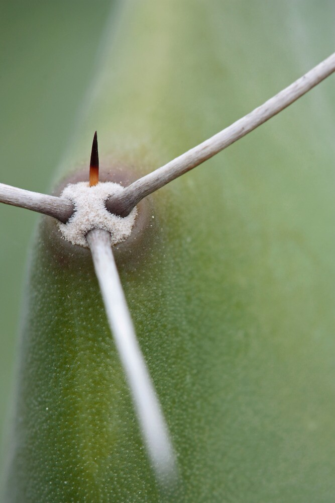 Cactus abstract by Etwin