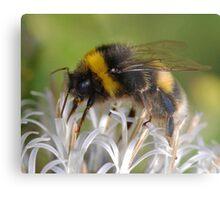 Bust Bee Metal Print