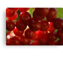 berry red Canvas Print