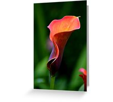 ~ Colourful Calla Lily ~ Greeting Card