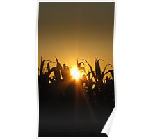 silloette of the corn fields  Poster