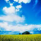 Living Sky by Jamie  Palmer