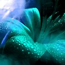 Lily & Colour. by Vitta