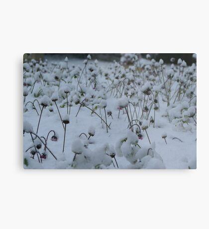 Snow Metal Print