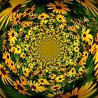 Black Eyed Susan Kaleidoscope by Debbie Robbins