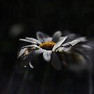 Raining Light by KatsEyePhoto