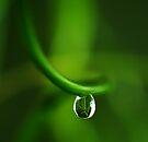 drop in green by Ingrid Beddoes