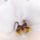 Orchid I by Julie-anne Cooke Photography