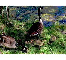 A Fine Canadian Family    Photographic Print